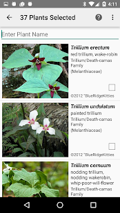 Connecticut Wildflowers- screenshot thumbnail