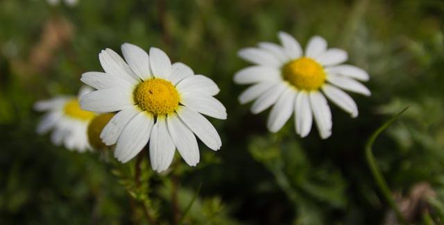 Il risveglio dei fiori di 16vale81