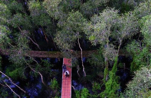 Về làng nổi Tân Lập khám phá rừng tràm 4