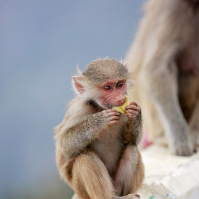 KSA .. ABHA by Ahmed Rayan - Animals Other