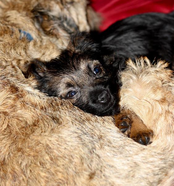 Photo: Asleep with Maisie
