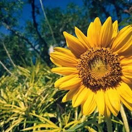 floral by Gershon Cuizon - Uncategorized All Uncategorized