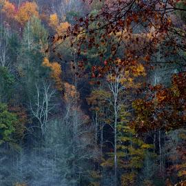 by Bruce Cramer - Landscapes Forests (  )