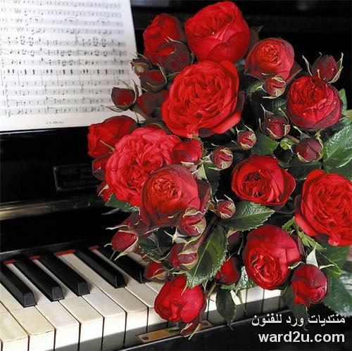 ورد جميل على مفاتيح البيانو