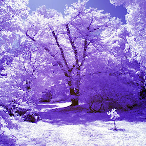 Infrared garden by Giuseppe Ciaramaglia - Nature Up Close Trees & Bushes ( park, infrared, garden )