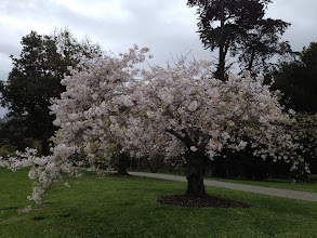 Photo: Spring blossoms in San Francisco