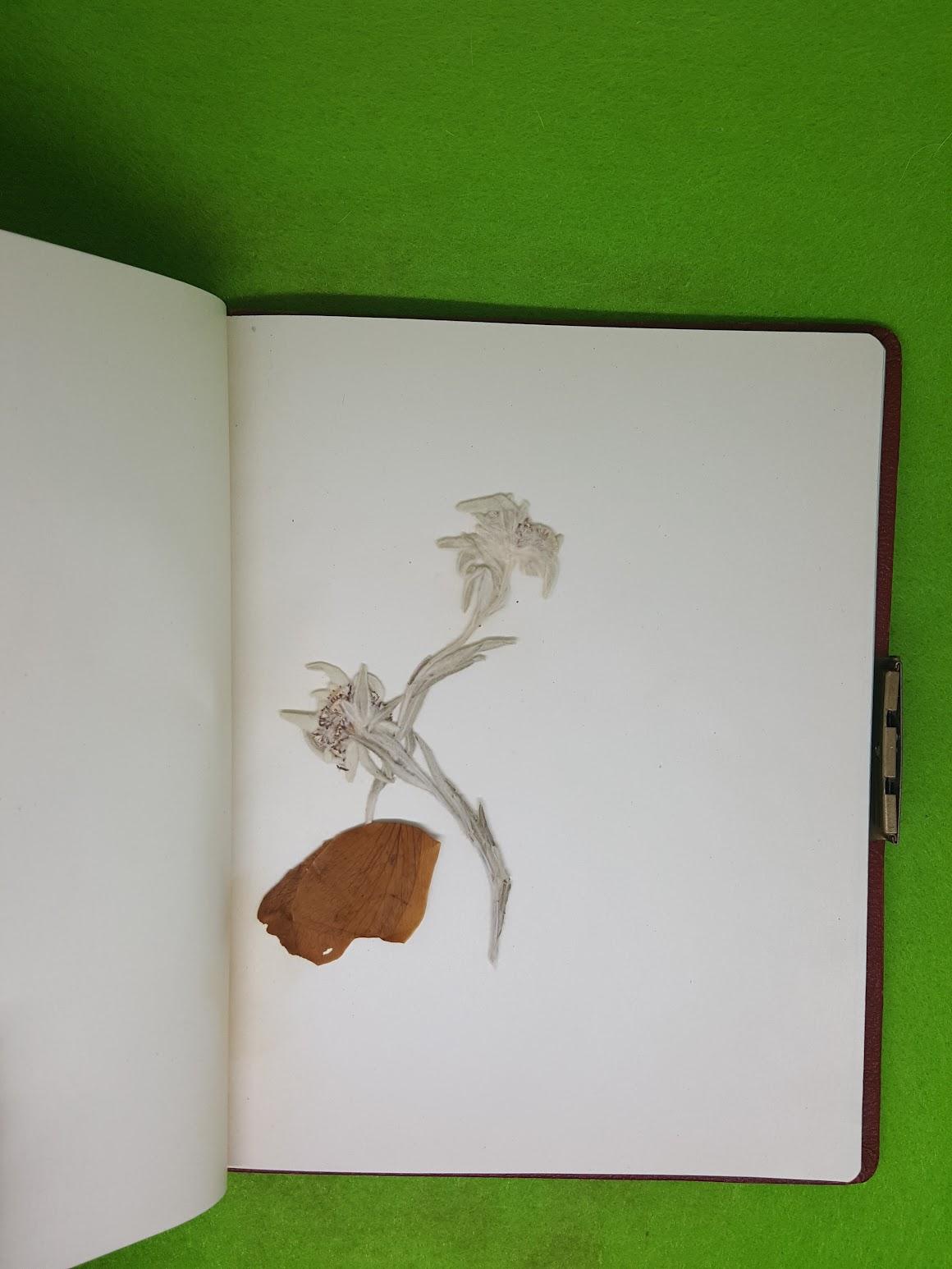 Tagebuch Omi