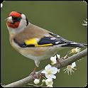 Top Birds Ringtones icon
