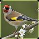 Top Birds Ringtones