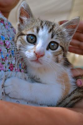 Il Gattino di alessiaphoto