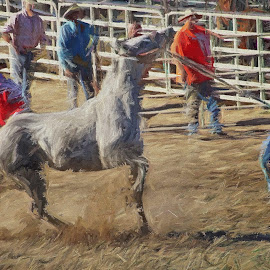 Rodeo action by Gaylord Mink - Digital Art Places ( horse, sports, action, rodeo, cowboys )