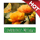 Download Condolences Messages For PC Windows and Mac