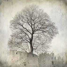 white tree by Diana Calvario - Instagram & Mobile iPhone