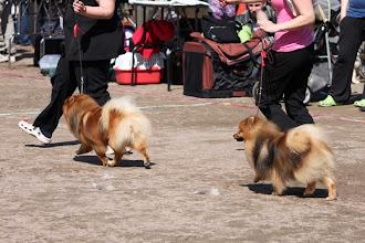 Photo: Notte ja Niitti kilpailuluokassa
