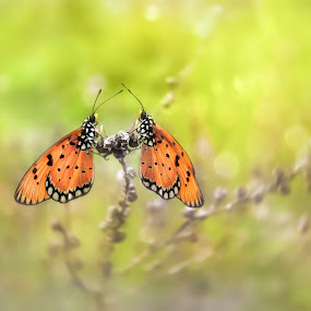 Morning delight by Dhimas Prastowo - Animals Insects & Spiders ( #art, #moment, #uclose, #bug, #insect, #macro, #butterfly )