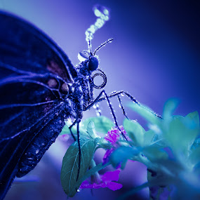 Wet Butterfly by Derek Kind - Animals Insects & Spiders ( water, butterfly, macro, butterflies, wet )