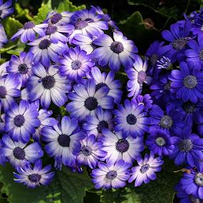 by Cora Lea - Flowers Flower Gardens (  )