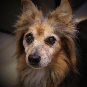 Dyson by Bradley Foot - Animals - Dogs Portraits ( pets, animal, portrait, dog, pet )