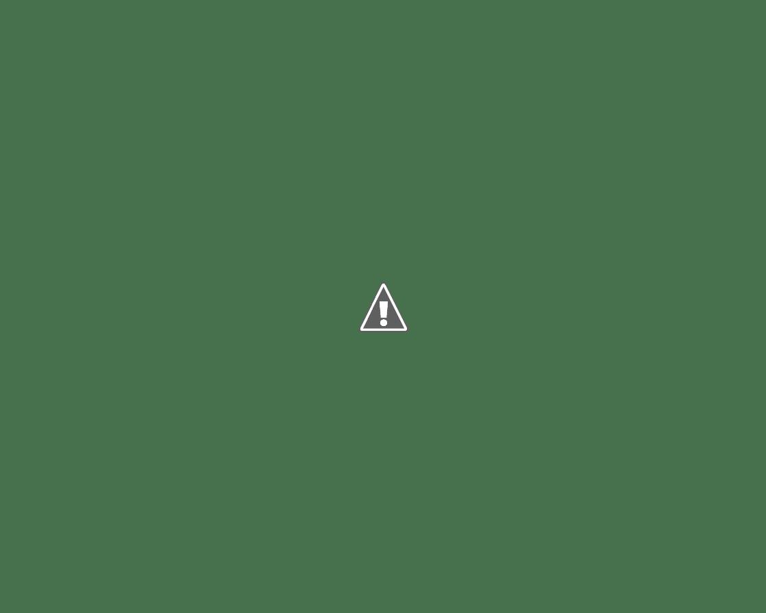 水面で魚を咥えるカワセミ