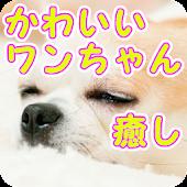 犬の癒しいろいろ写真!