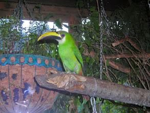 Photo: A toucan at Hotel Atitlan on Lake Atitlan.
