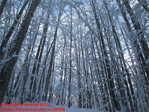 Photo: IMG_9903 verso il cielo carichi di bianco