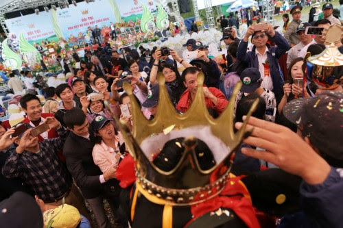 Du lịch Mộc Châu, hội thi hoa hậu bò sữa 5