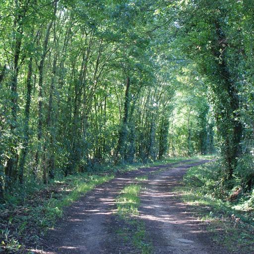 Chemins de promenade à l'ombre