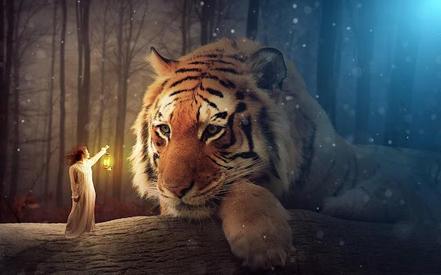 Tiger - New Tab in HD