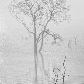 by Kenji Le - Landscapes Waterscapes ( fog )