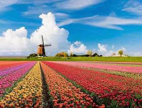 Photo: Nederland Bollenvelden  Bron: www.picturesofholland.nl  .