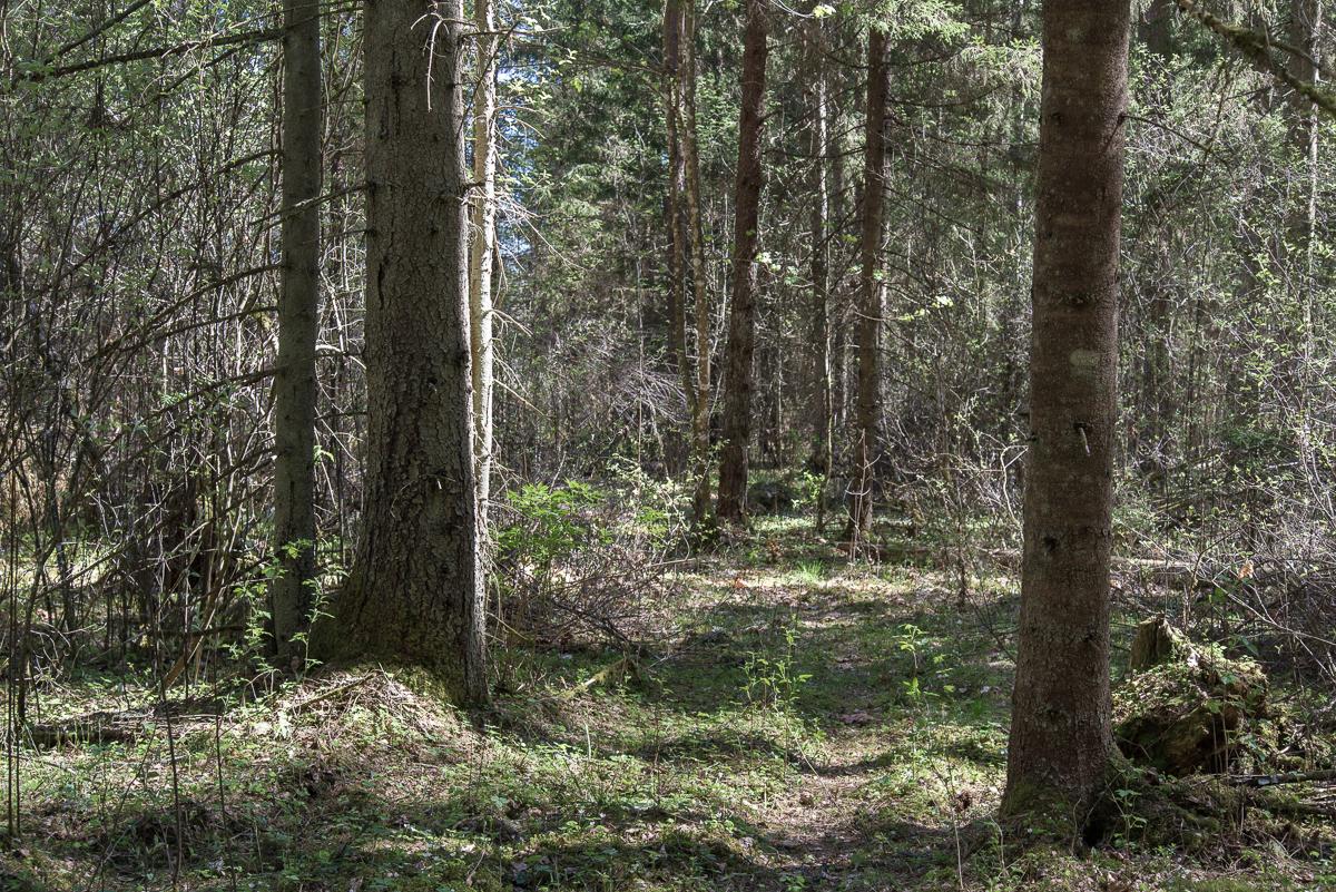 Metsatee Võrumaal. Foto: M. Kats