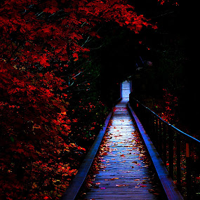 Dark Path by Ellason Boyle - Landscapes Forests ( orange, red, hiawatha, fall, path, dark, pwcautumn, yellow, leaves )
