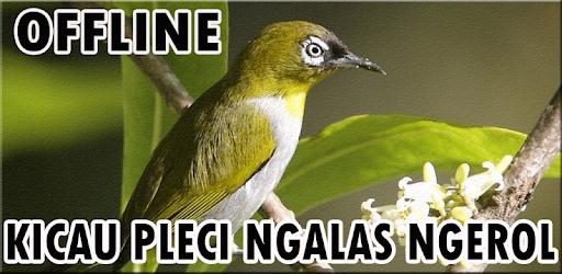 Suara Pleci Ngalas Offline 1 0 (Android) - Download APK