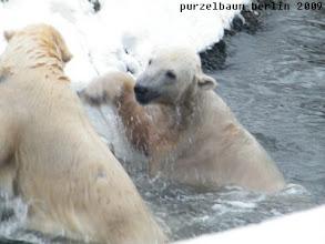 Photo: Wasserspass bei Eisbaertemperaturen :-)