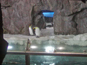 Photo: The conditions in the penguin enclosure, including lighting and temperature, are changed depending on the time of year to mimic the penguins' natural environment
