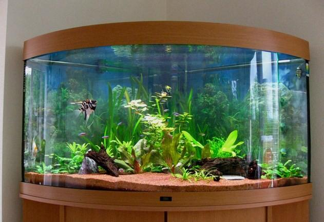 Fish Aquarium Design Ideas - Android Apps on Google Play