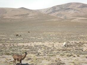 Photo: コルカ渓谷からアレキパへの帰り
