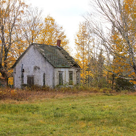 School House in the Woods by Lena Arkell - Buildings & Architecture Decaying & Abandoned ( orange, fall, leaves, school, old, decay, autumn, abandoned )