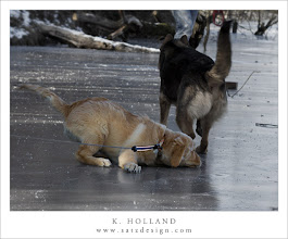 Photo: Buddy on ice Nr. 8