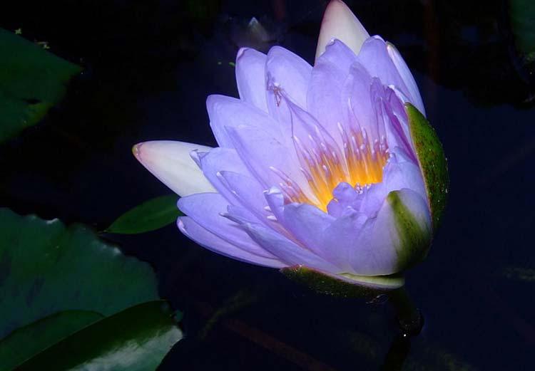 A blossom at the Cairns Botanic Gardens.