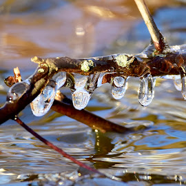 frozen in time by Jeff Sluder - Nature Up Close Natural Waterdrops ( icicles )