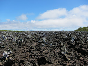 Photo: Lichen are the first life form to colonize the fresh lava
