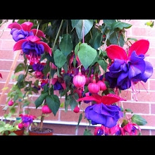 Photo: Nice colorful garden flowers #intercer #flower #garden - via Instagram, http://instagr.am/p/MXLdXSpfvu/