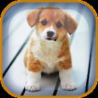 子犬ライブ壁紙 icon