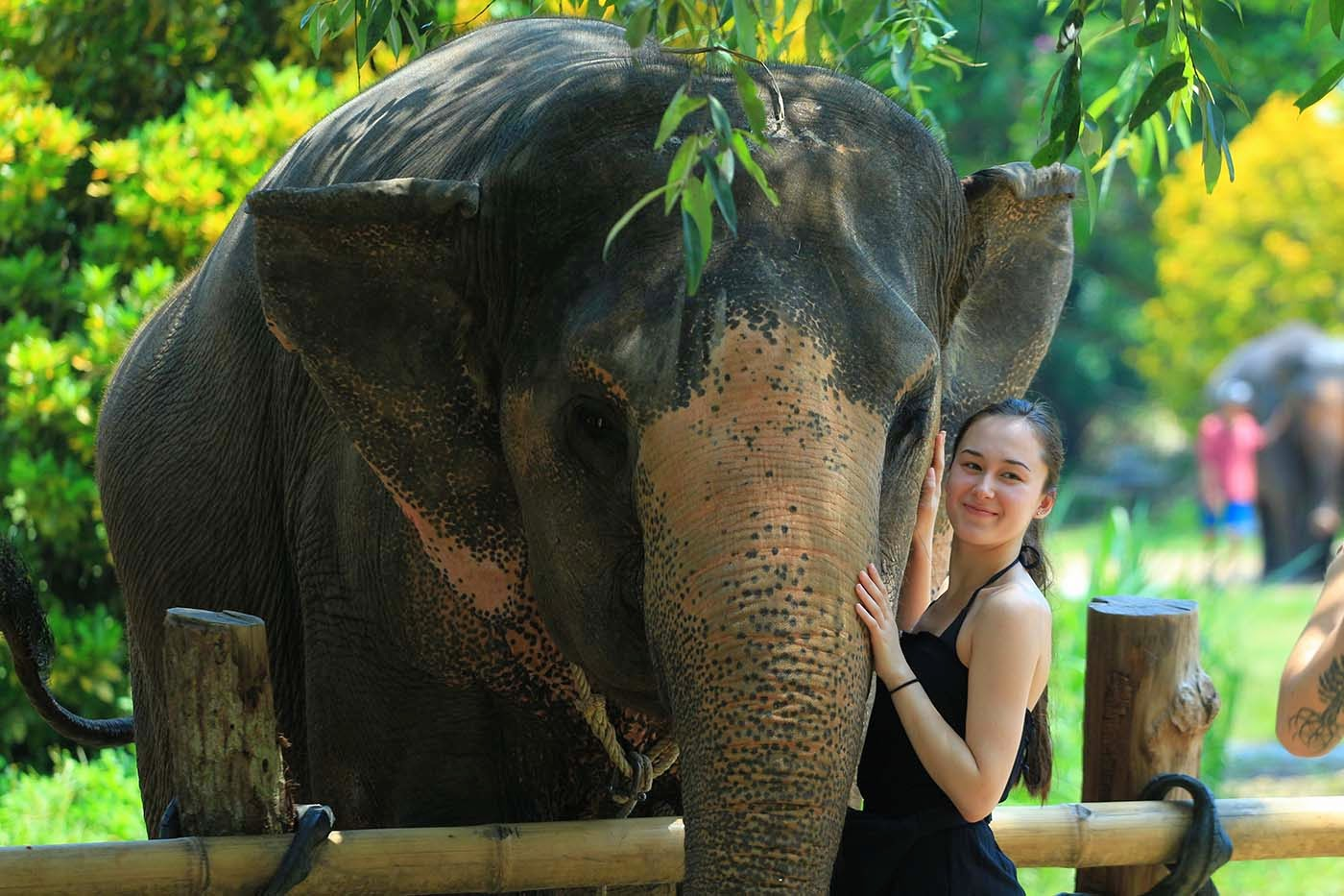 Krabi Elephant Sanctuary