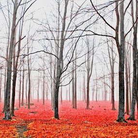 Red forest by Edit Peterffy - Landscapes Forests ( abstract, red, nature, autumn, edit, forest,  )