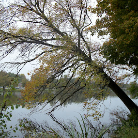 Leaning Tree  by Barbara Storey - Landscapes Forests ( water, tree, riverside, canada, nature, autumn, avon river, ontario,  )