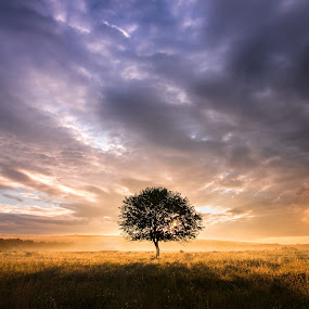 Lonely tree by Alex Jitaru - Landscapes Sunsets & Sunrises