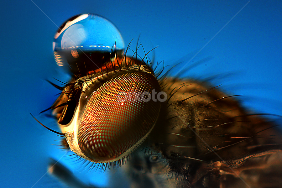 Fly by Selman Parlak - Abstract Macro
